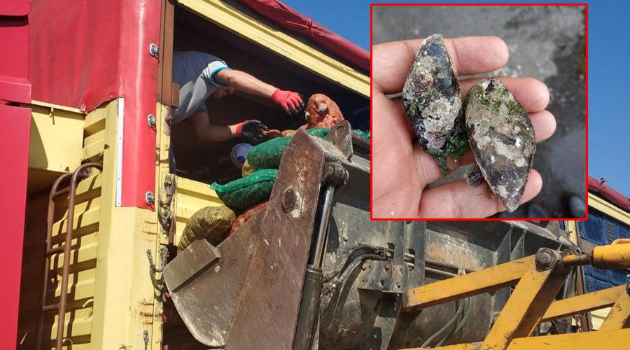 Sağlıksız olduğu belirlenen 8 ton midye yakalandı